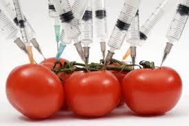 biotechnilogy tammoto
